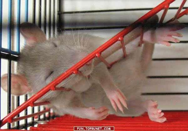назначению по ночам приходит мышь нескольких одинаковых составу